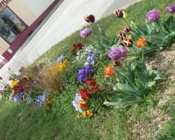 Fleurissement Printemps 2012 023