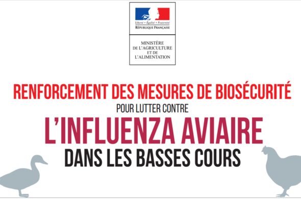 influenza aviaire 2020 (2)